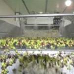 Mlyn olivy 2