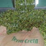 Olivi v triedicke s